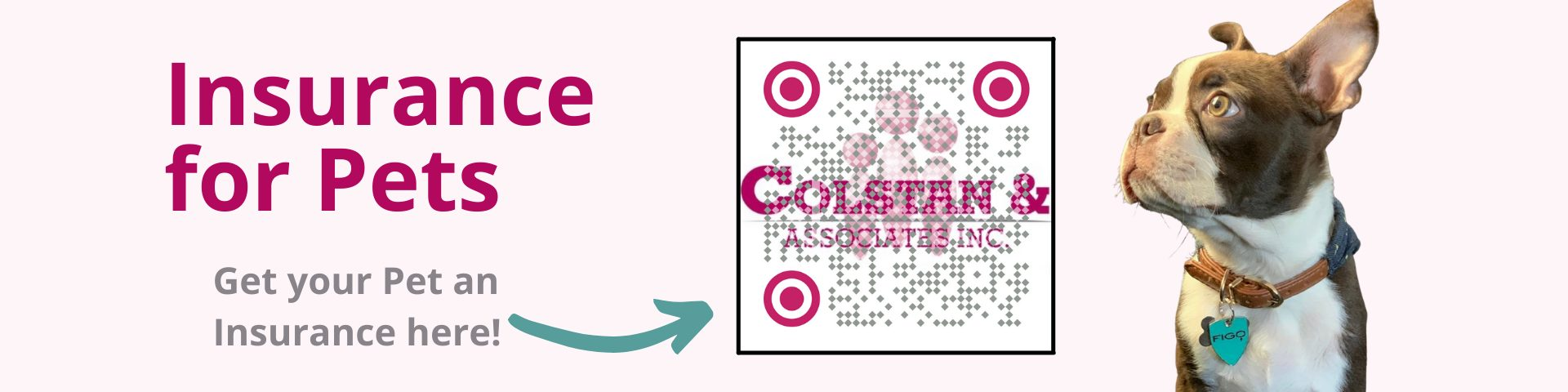 colstan & associates inc - Insurance for pets 1 - Colstan & Associates Inc